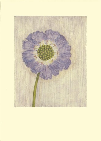 Kort Two Bad Mice: Single Scabious