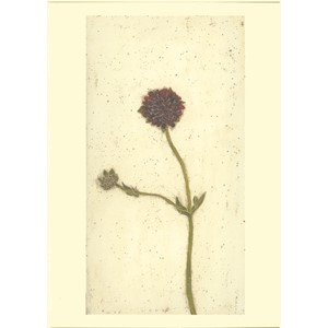 Kort Two Bad Mice: Red Scabious